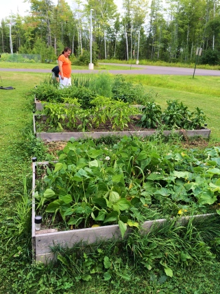 Sandra Corbine examines the raised beds at the Elders Center. They've had these gardens for 3 or 4 years. Elders stop by and take care of these gardens, and then the food goes into the elders' lunches. Sandra also got a grant to get more vouchers made available to elders that they can use to shop with local farmers (like Don's berry patch and Bob the corn man), as well as the Ashland food co-op. Photo by Elizabeth Hoover
