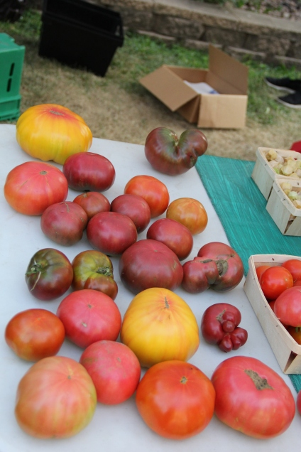 A few of the heritage tomato varieties grown at the DOWH farm. Photo by Angelo Baca