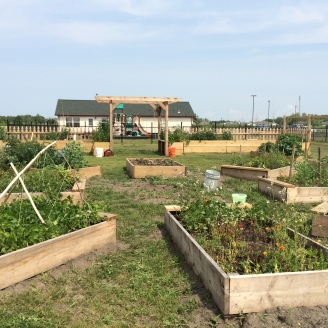 Raised beds at the White Earth Tribal and Community College. Photo by Elizabeth Hoover