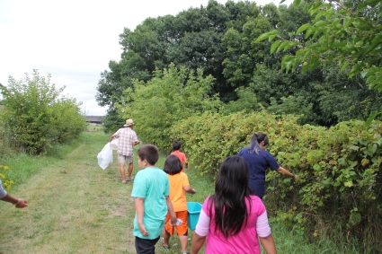 Walking out to the bean patch, picking wild grapes along the way. Photo by Elizabeth Hoover