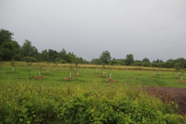 Orchard at the Gitiganing site. Photo by Angelo Baca