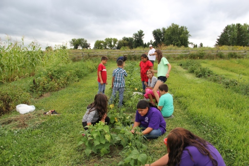 Ho-Chunk youth picking beans. Photo by Elizabeth Hoover