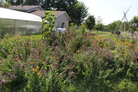 Pollinator garden at DOWH. Photo by Angelo Baca