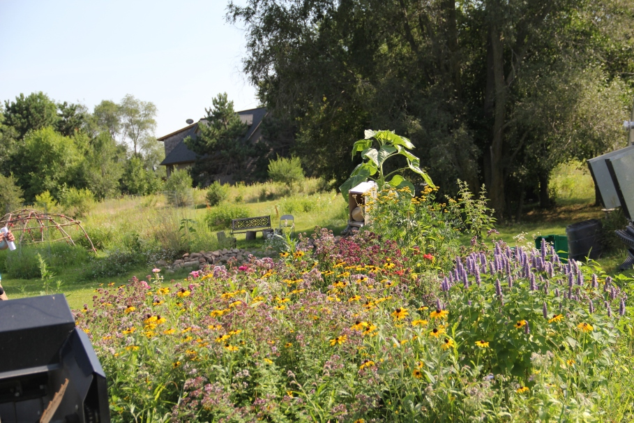 Pollinator garden to feed the bees. In the background is the frame of a sweat lodge for the Women's Circle that meets each month between April and November host full moon ceremonies and discussions about traditional foods. Photo by Angelo Baca