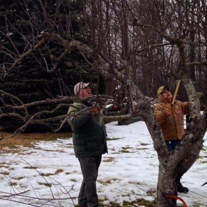 Pruning apple trees at a FIOM workshop in March. Photo courtesy of Food Is Our Medicine