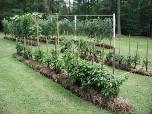Example of a straw bale garden. Photo courtesy of Roots Simple