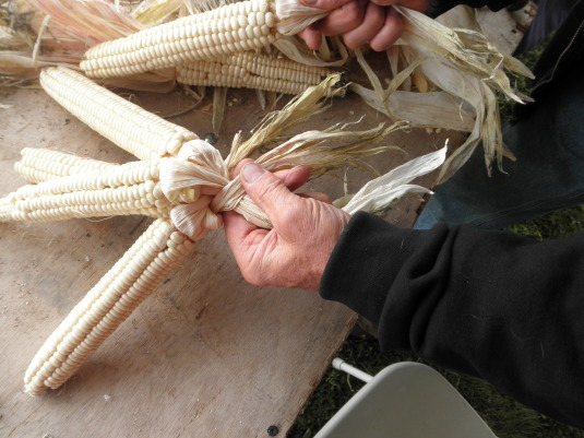 Sugar Bear braiding corn. Photo by Elizabeth Hoover (October 2013)