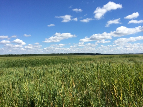 "Big Rice Lake, what Winona LaDuke describes as ""the mother lode of rice for our people."" Photo by Elizabeth Hoover"