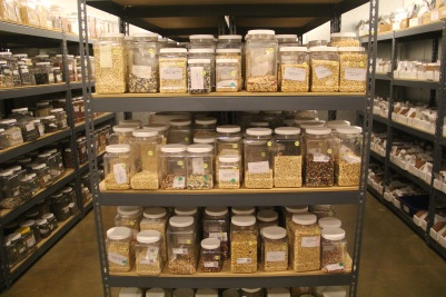 Some of the 2,000 varieties of arid climate seeds that are curated by Native Seeds/SEARCH. Photo by Angelo Baca